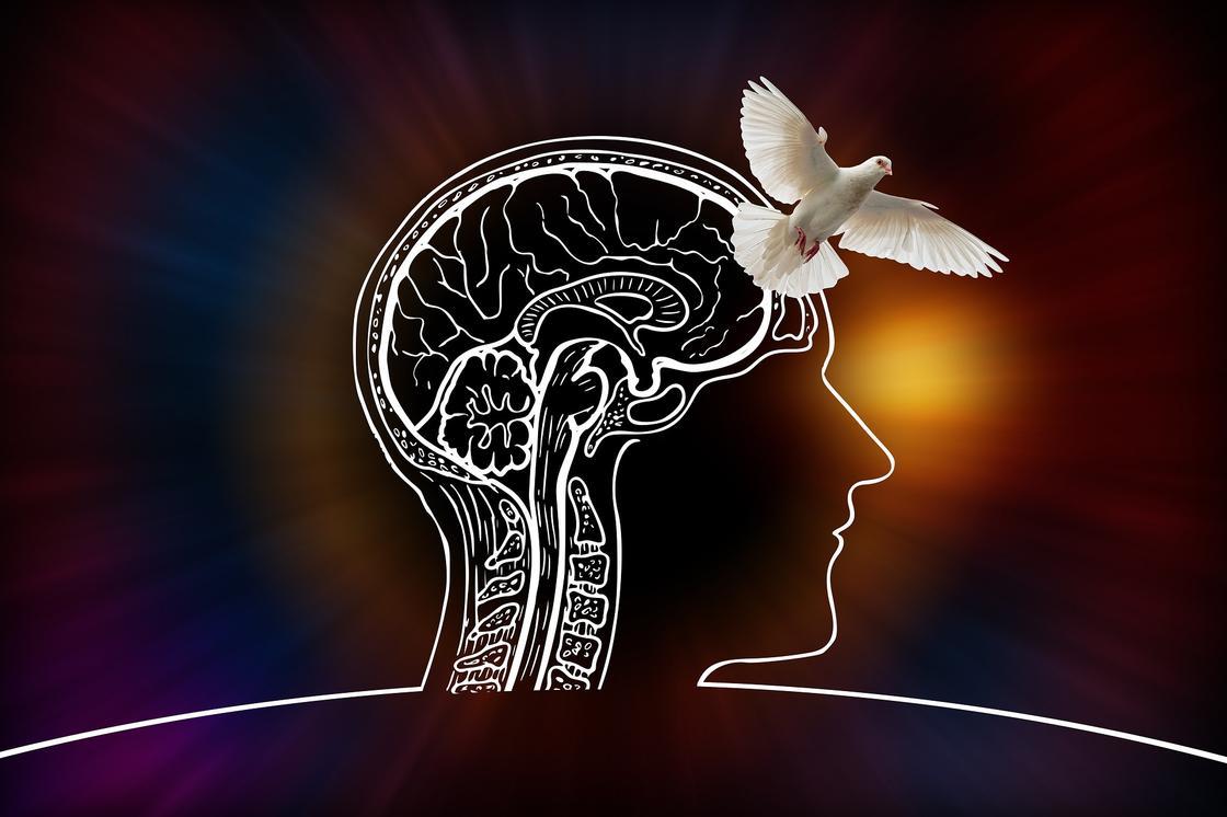 Голубь на фоне рисунка мозга человека