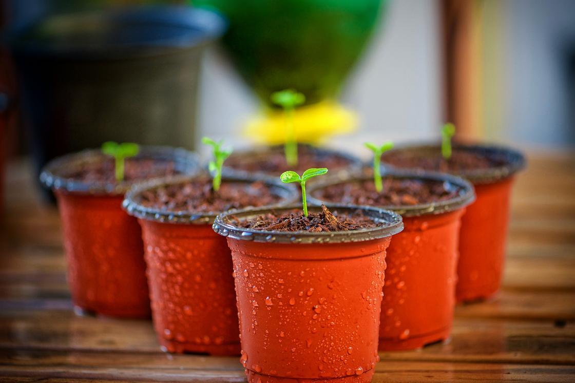 Выращивание цветов в вазонах