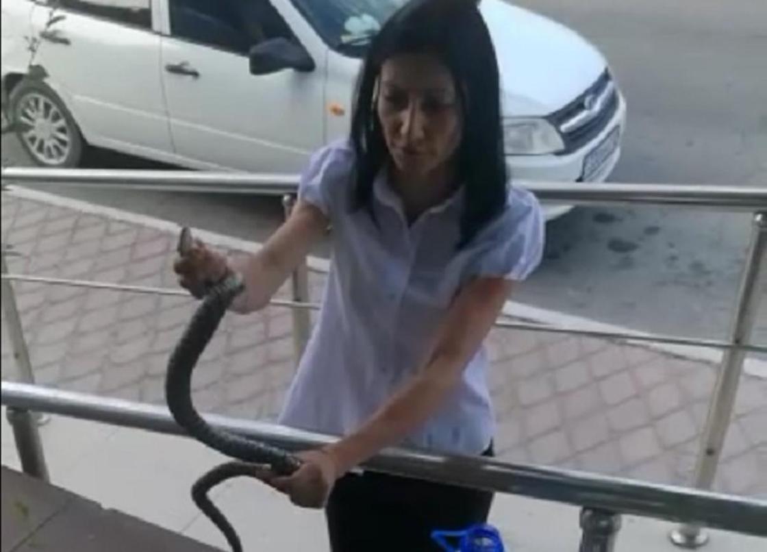 Крупную змею поймали в Центре обслуживания потребителей в Актау (видео)