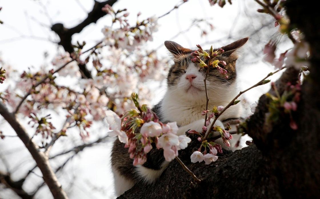 Какой будет погода на Наурыз в Алматы, рассказали синоптики