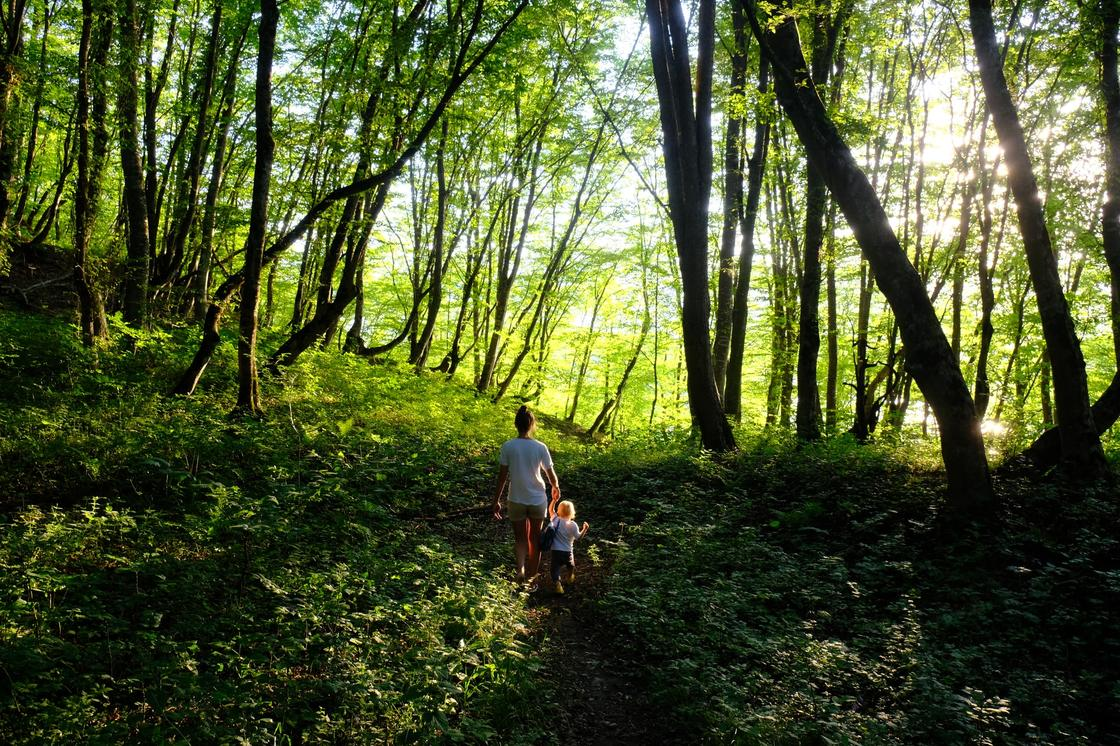мама с ребенком в лесу