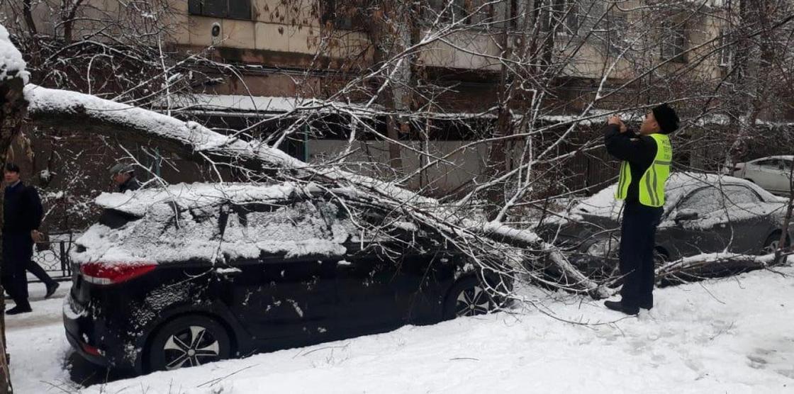 Обильный снегопад прошел в Алматы: упало несколько деревьев
