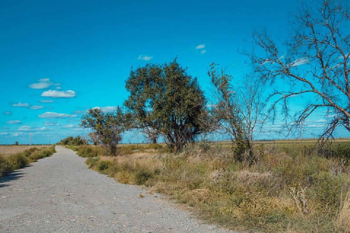 Солтүстік Қазақстанда белгісіз біреу көлігімен 18 жастағы жігітті қағып, жол жиегінде тастап кетті