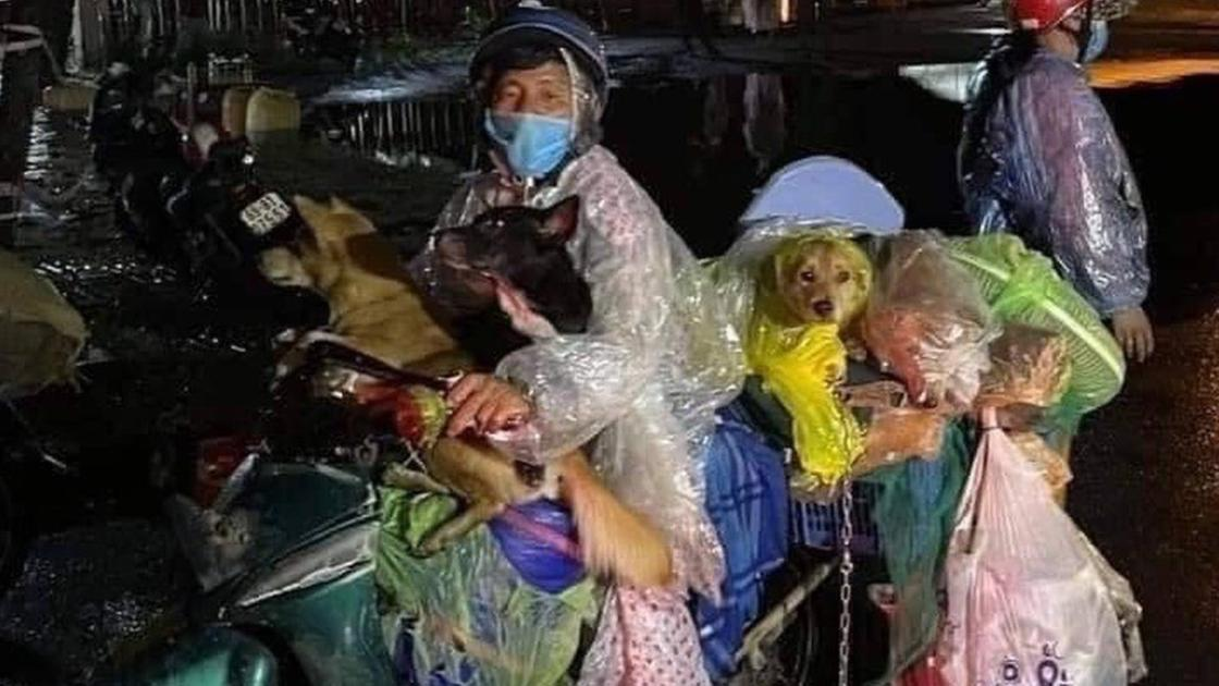 Фам Минх Хунг с собаками