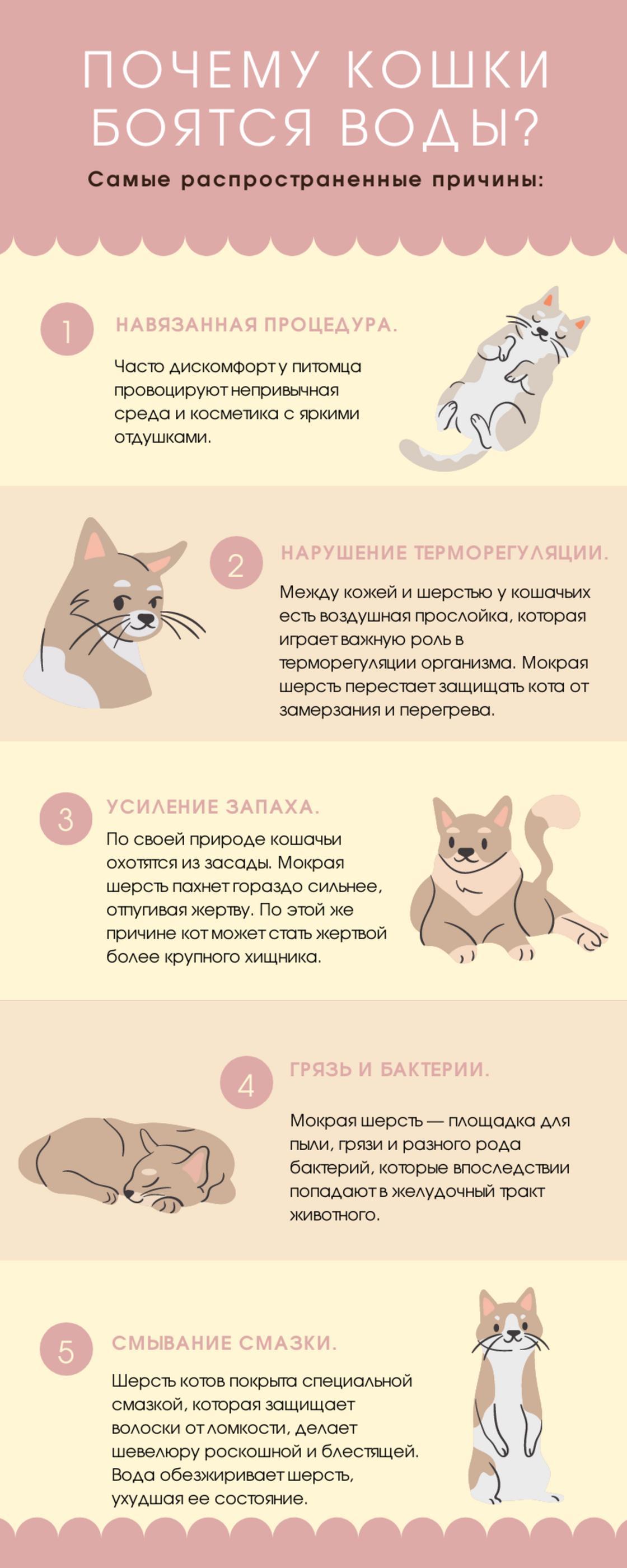 Причины боязни воды у котов