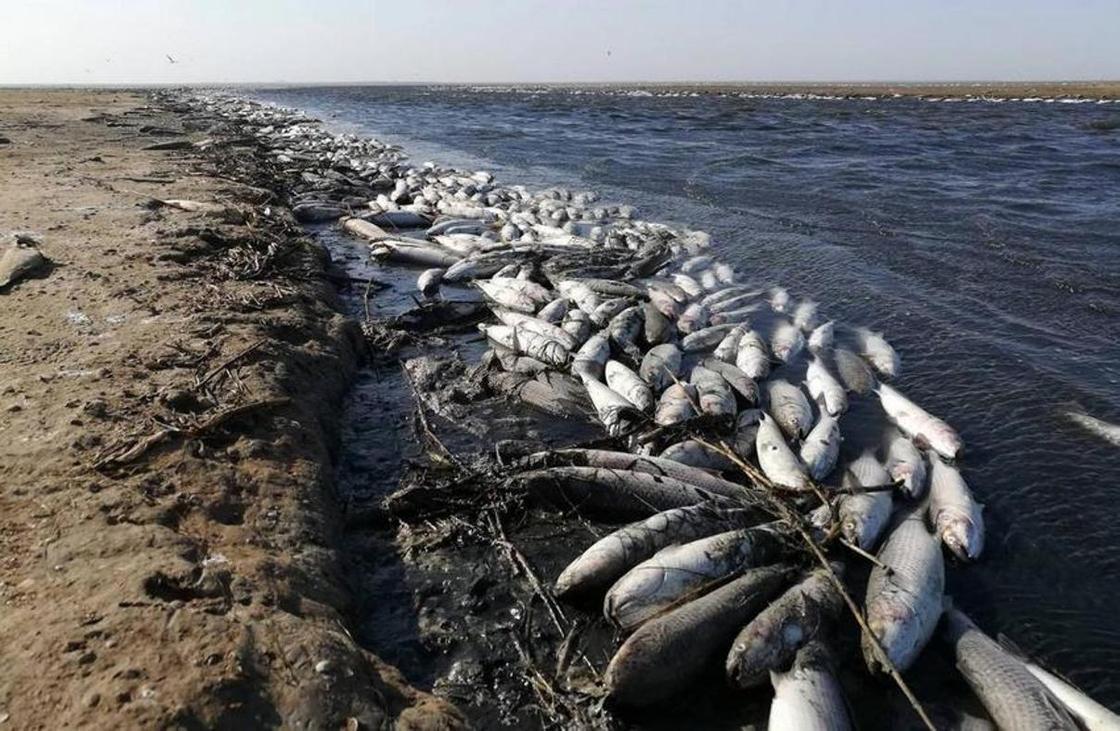 Массовая гибель рыбы на Урале: возбуждены уголовные дела