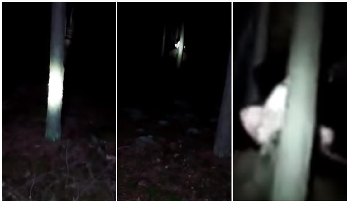 Парень услышал страшные крики в ночном лесу и снял на видео загадочно существо