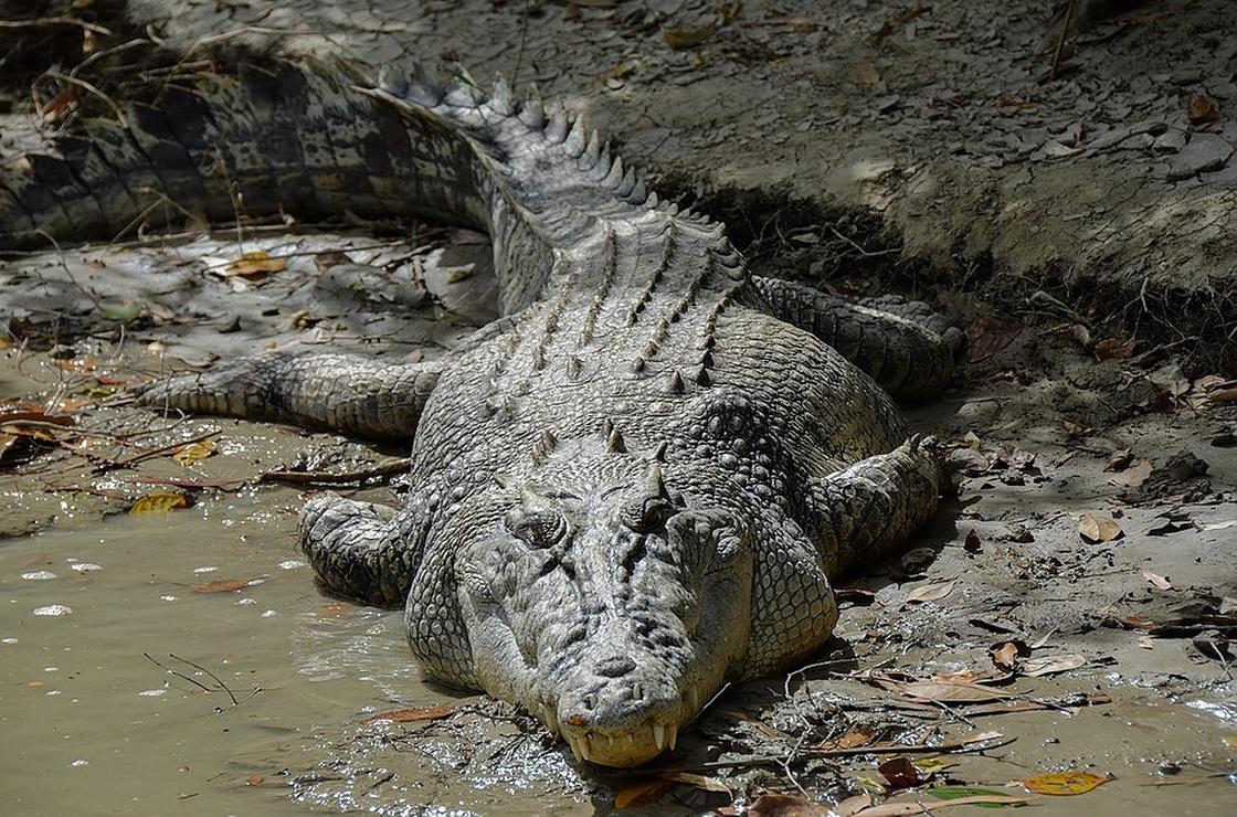 Самое большое животное в мире: топ-10