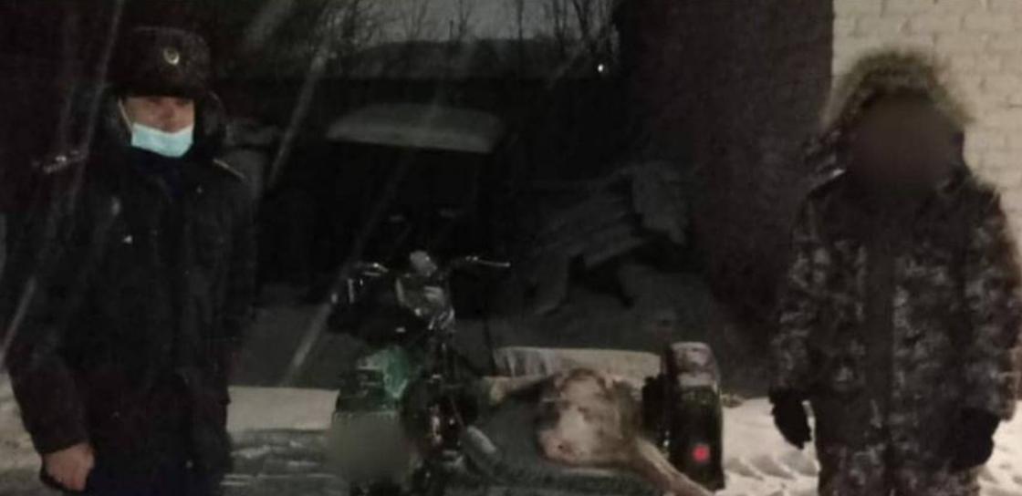 Туша косули лежит в коляске мотоцикла