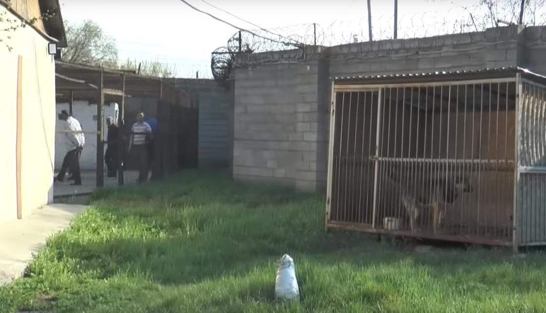 Как отбывают наказание нарушители режима карантина в Алматы