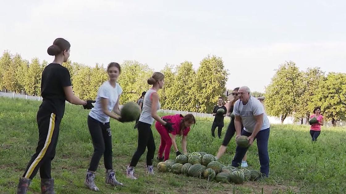 Лукашенко с красивыми девушками собрал арбузы (фото, видео)
