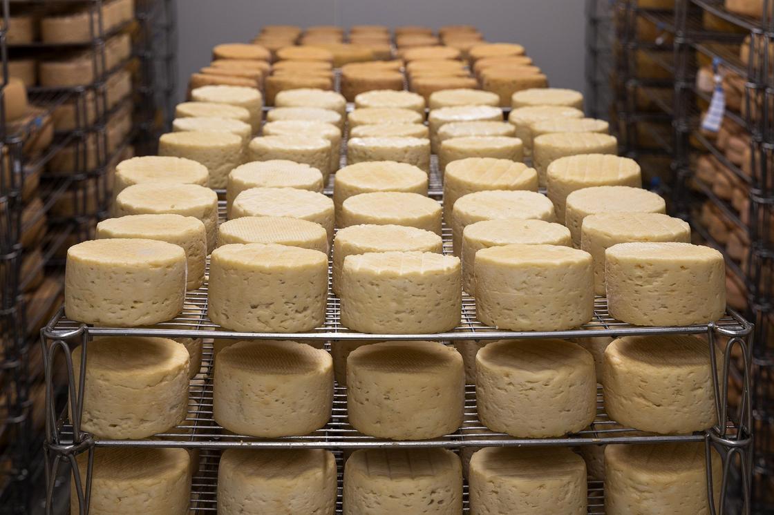 Сыр вызревает на полках в сырной камере