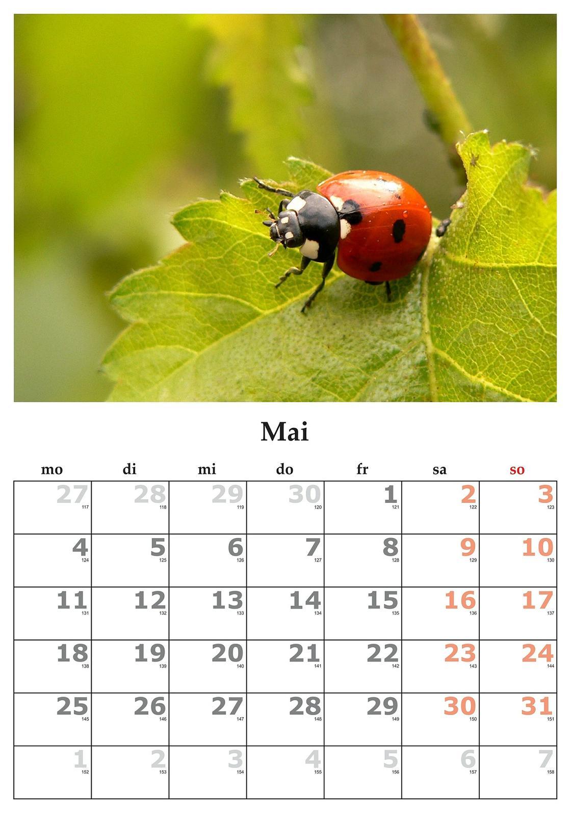 Какой сегодня праздник: календарь праздников 21 мая