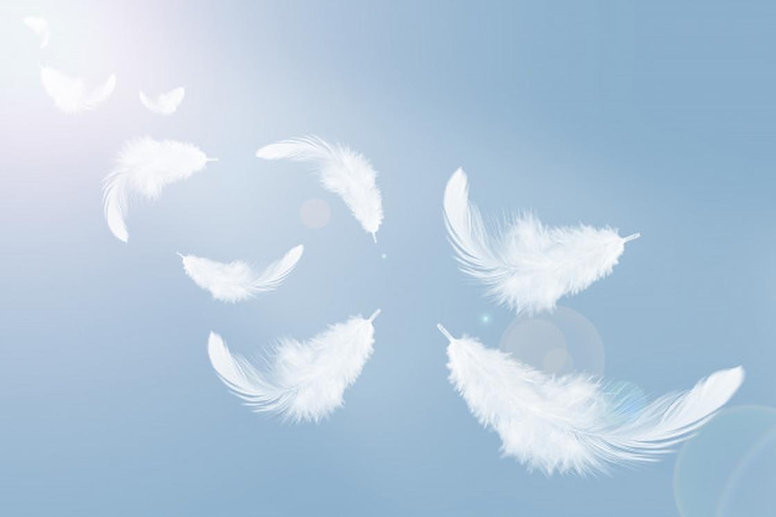 Падающие перья на голубом фоне