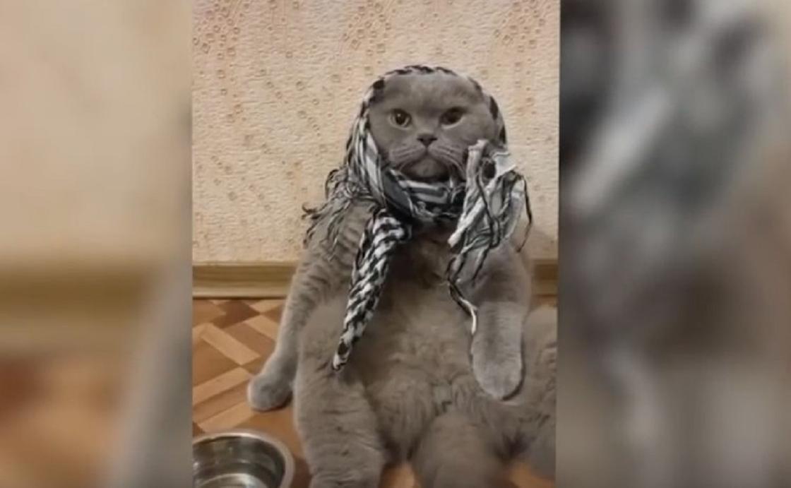 Кот на диете разжалобил пользователей Сети