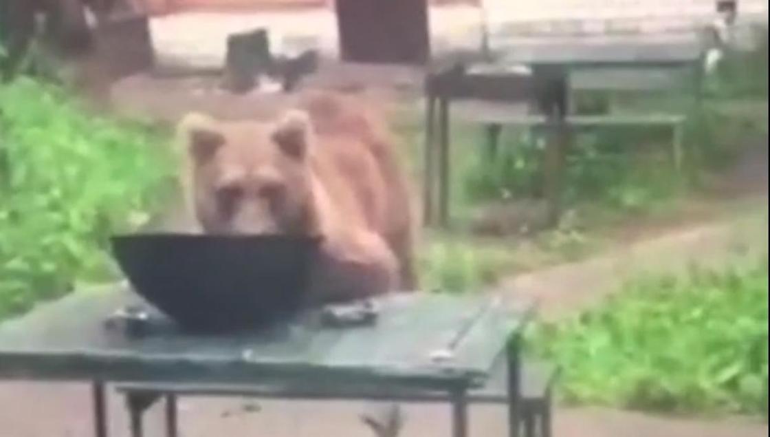 Медведь съел ужин отдыхающих туристов в Восточно-Казахстанской области (видео)