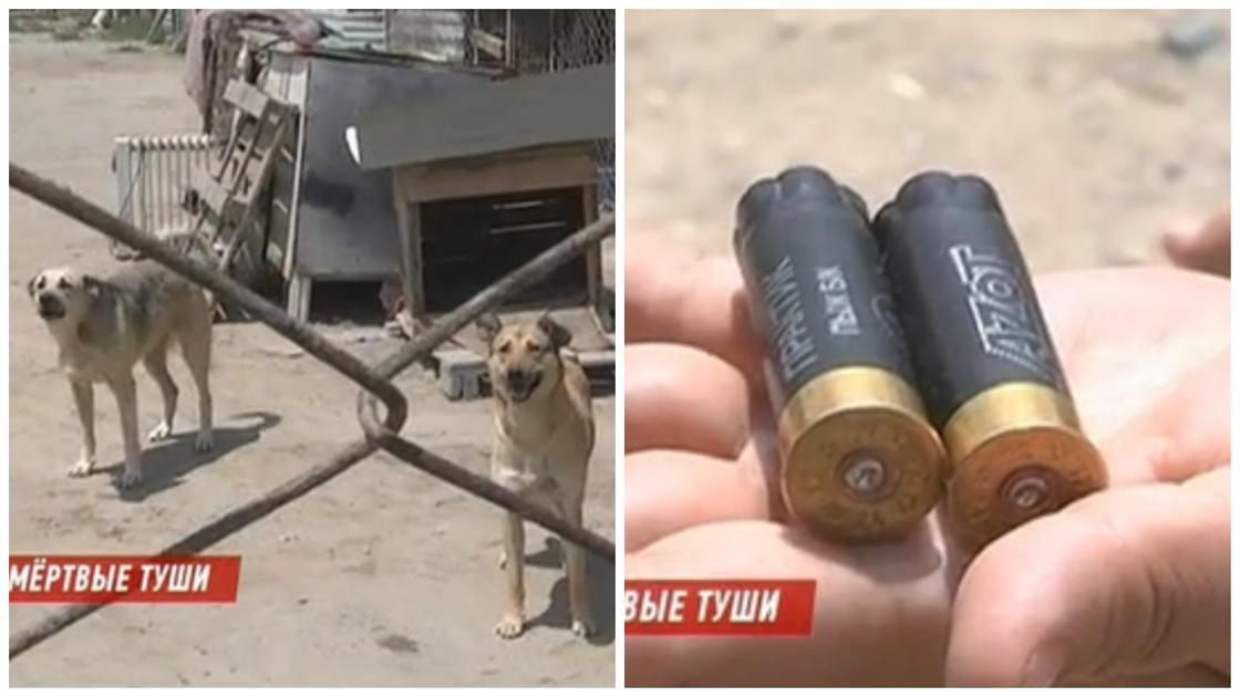 Неизвестные расстреляли собак в приюте для бездомных животных в Актау