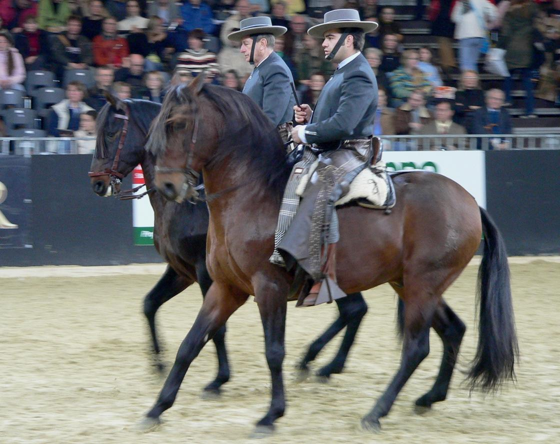 лошади со всадниками
