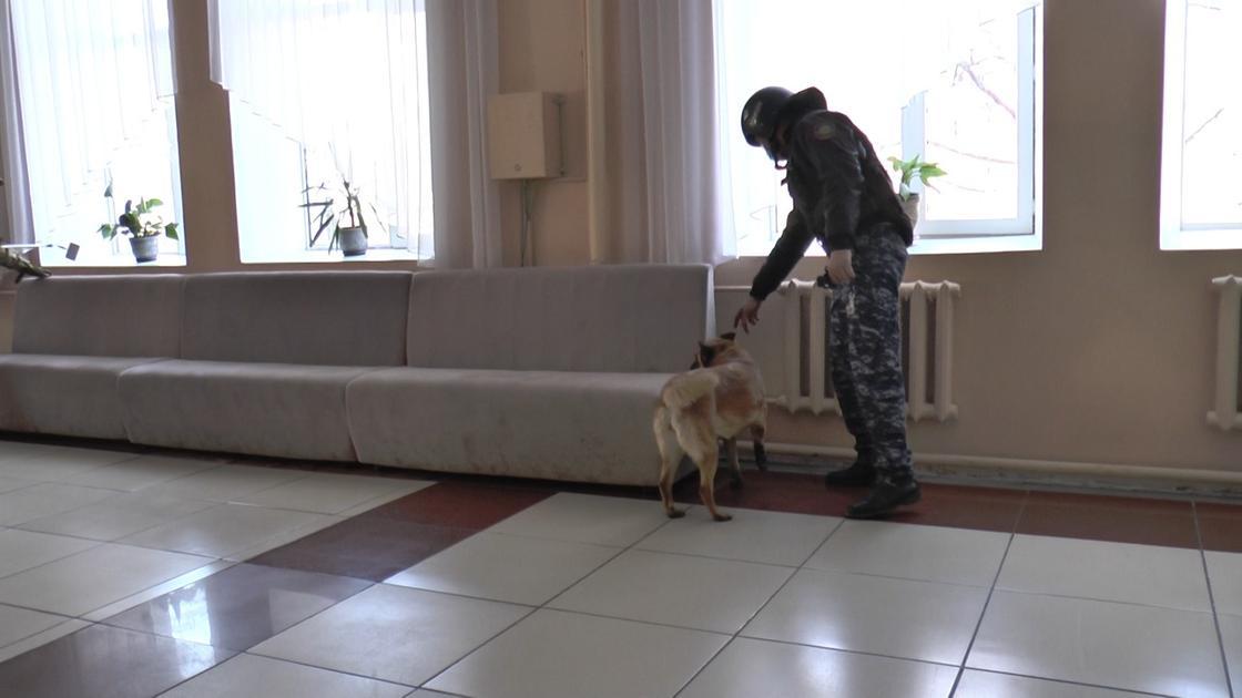 Сапер проверяет коридор в школе
