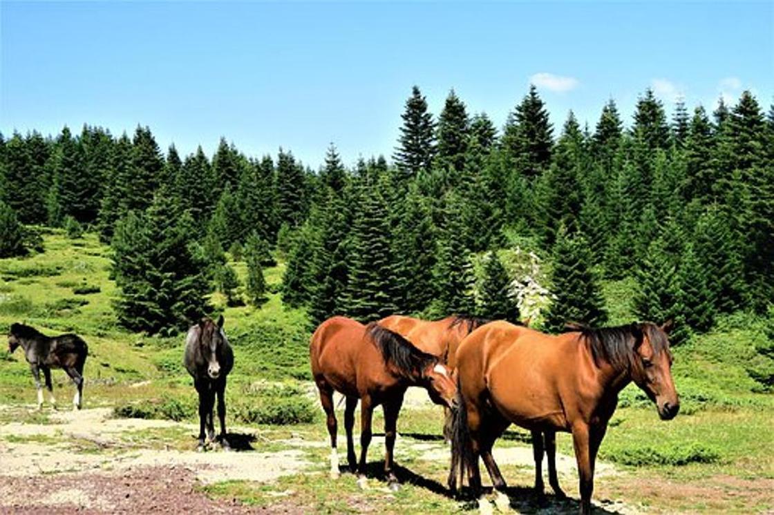 28 трупов лошадей нашли в Нур-Султане