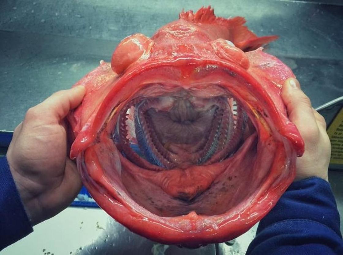 Рыбак показал шокирующие фото морских чудовищ: Люди просят больше не делать этого