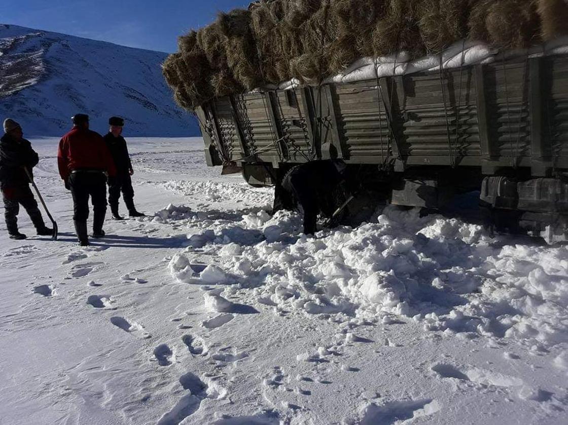 Моңғолияның қыстауында тұратын қазақтардың малы жұттан қырылып қалды