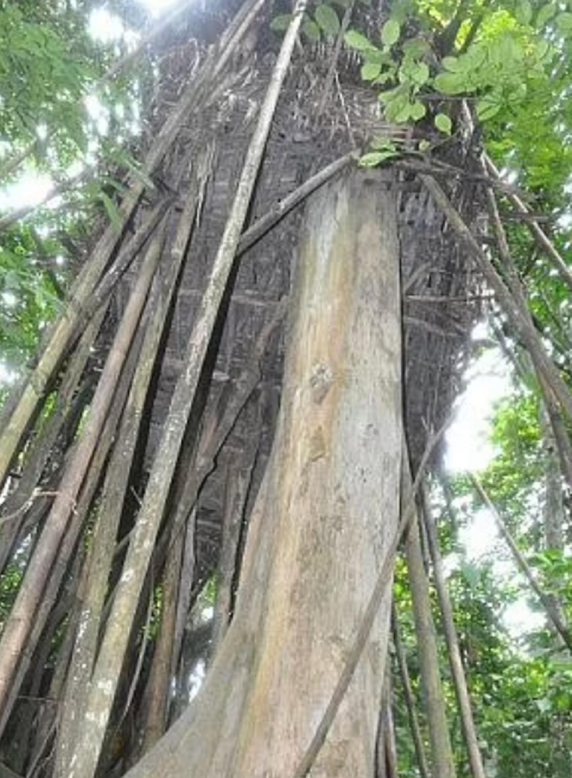 Лангтың джунглидегі үйі