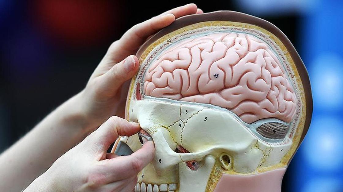 Названы главные причины преждевременного старения мозга