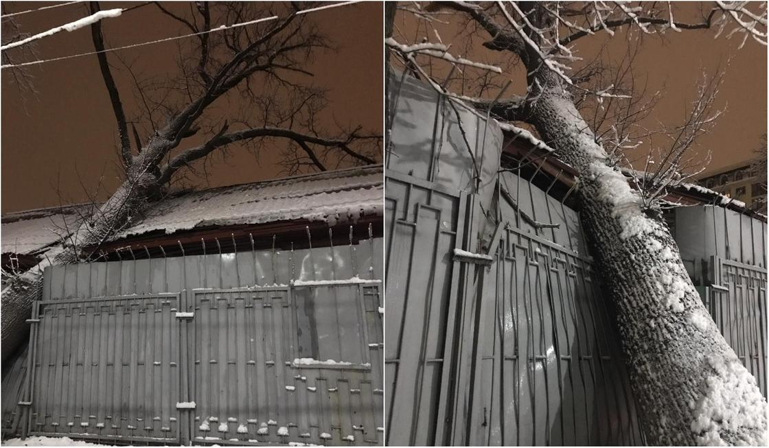 Трещина в палате психлечебницы в Алматы появилась после падения дерева (фото)