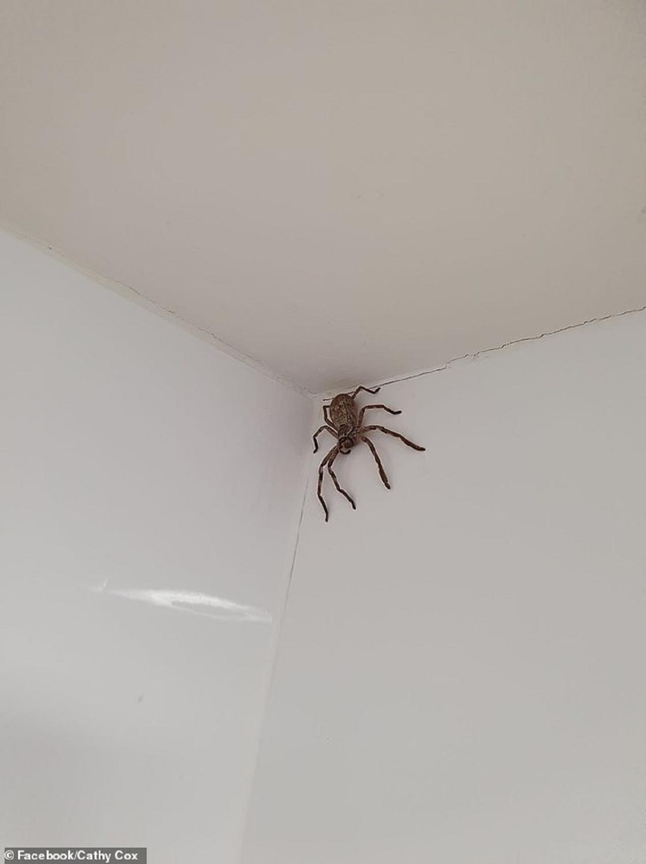 Паук в ванной комнате