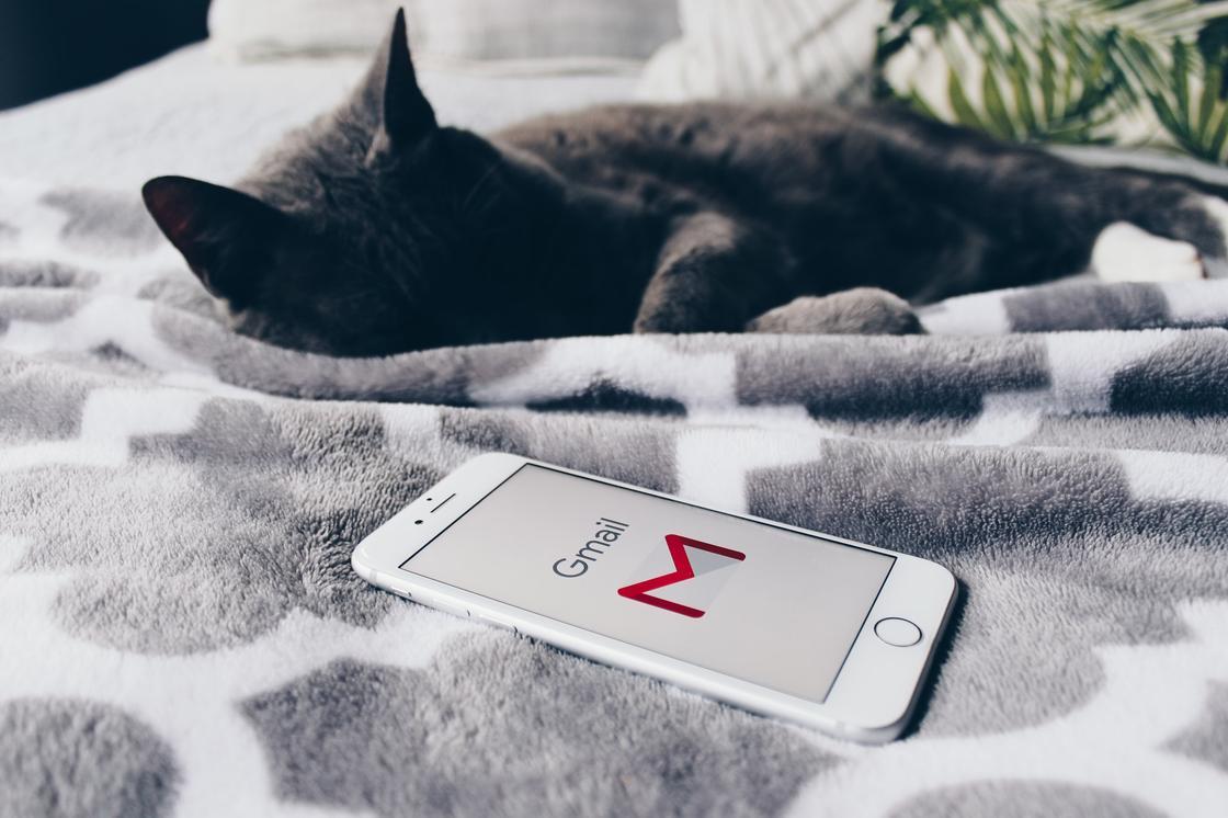 Телефон и кот