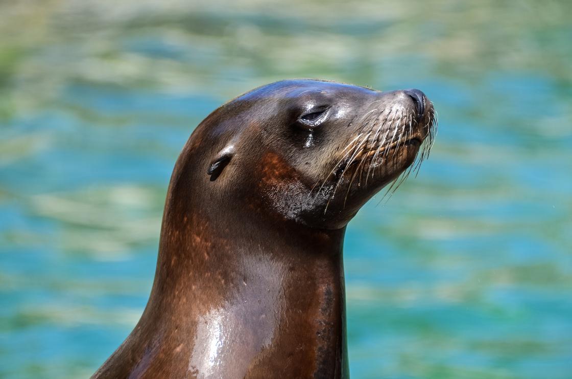 Людей, забивших тюленя в Мангистау, привлекут к ответственности