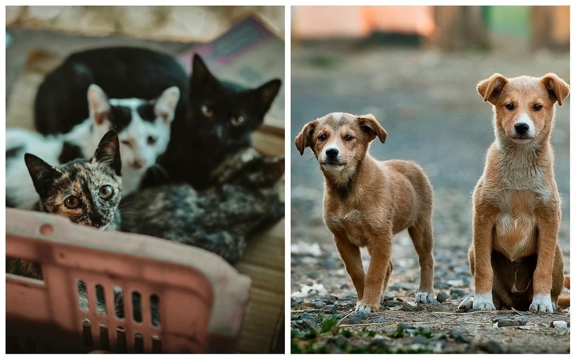 Мясо кошек и собак впервые запретили поедать на территории Китая