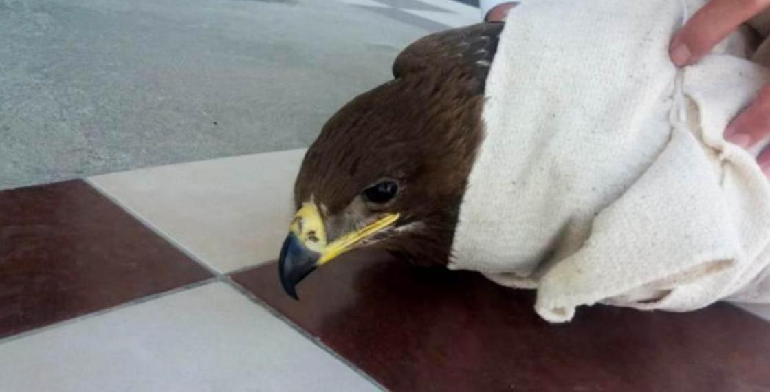Могло ударить током: орел попросил помощи у нефтяников на Тенгизе (фото, видео)