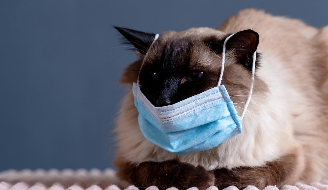 Можно ли заразиться коронавирусом от домашних животных, рассказал эксперт