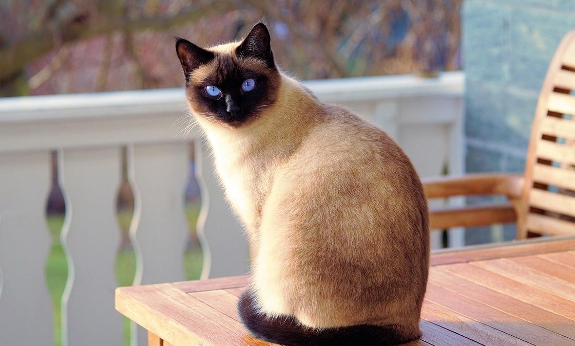 Кошки стали заражаться новым коронавирусом