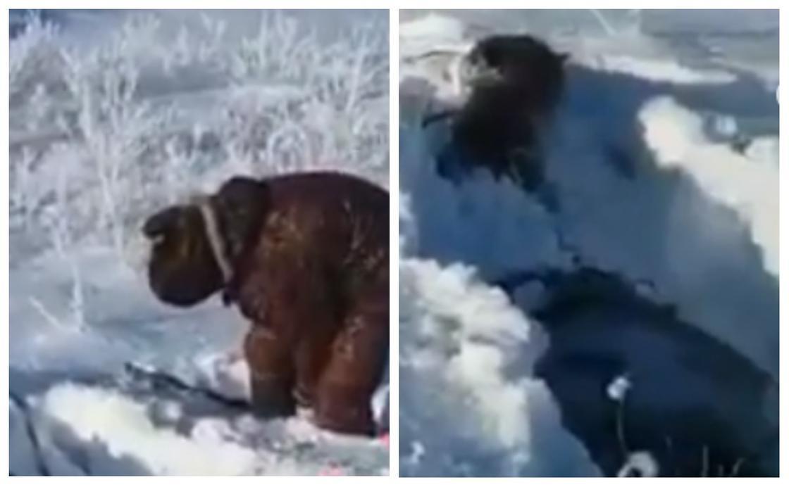 Шығыс Қазақстанда атқа мінген ер атымен бірге қалың қарға батып кетті (видео)