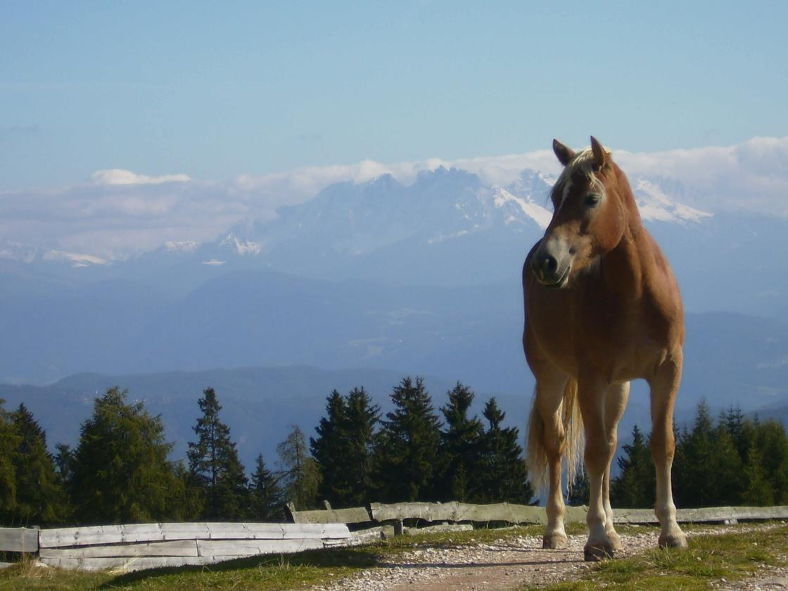 лошадь на фоне гор