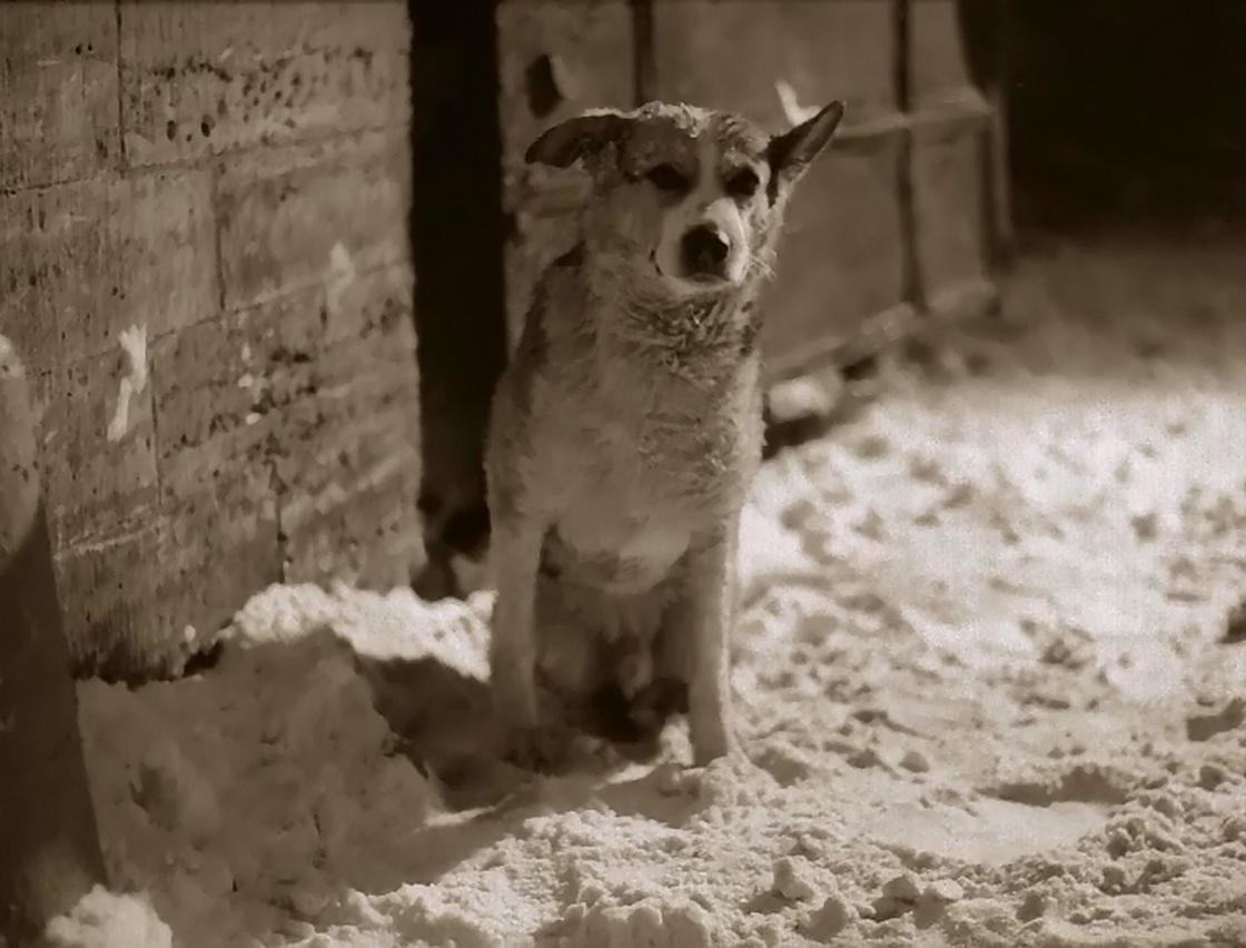 «Собачье сердце»: краткое содержание и анализ