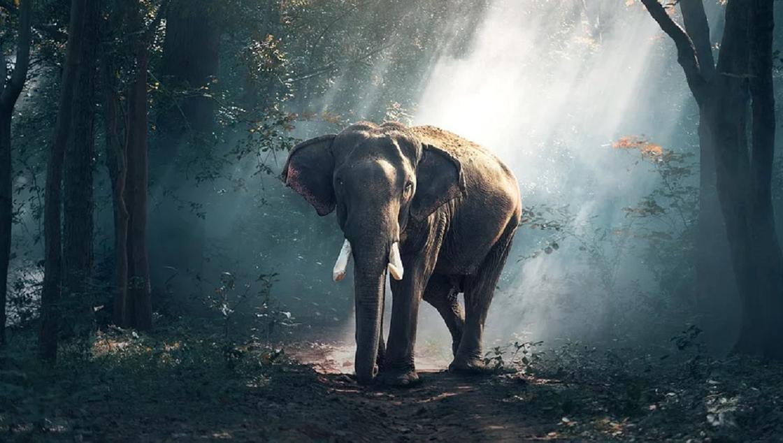 Слонов в Таиланде могут продать в зоопарки из-за коронавируса