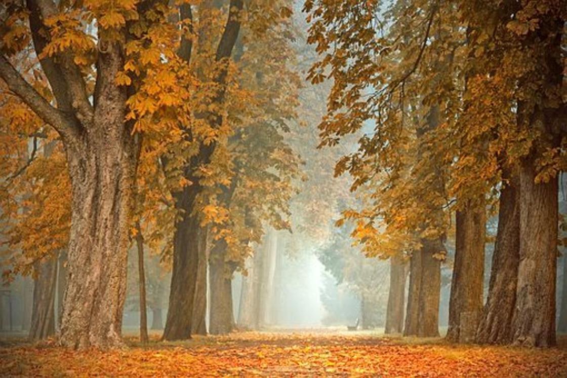 Какой сегодня праздник: календарь праздников на 22 ноября