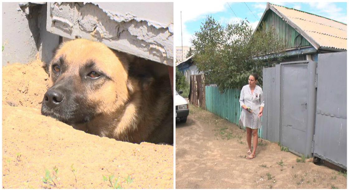 Контролер брызнула из перцового баллончика в собаку, а отравились дети в Павлодаре