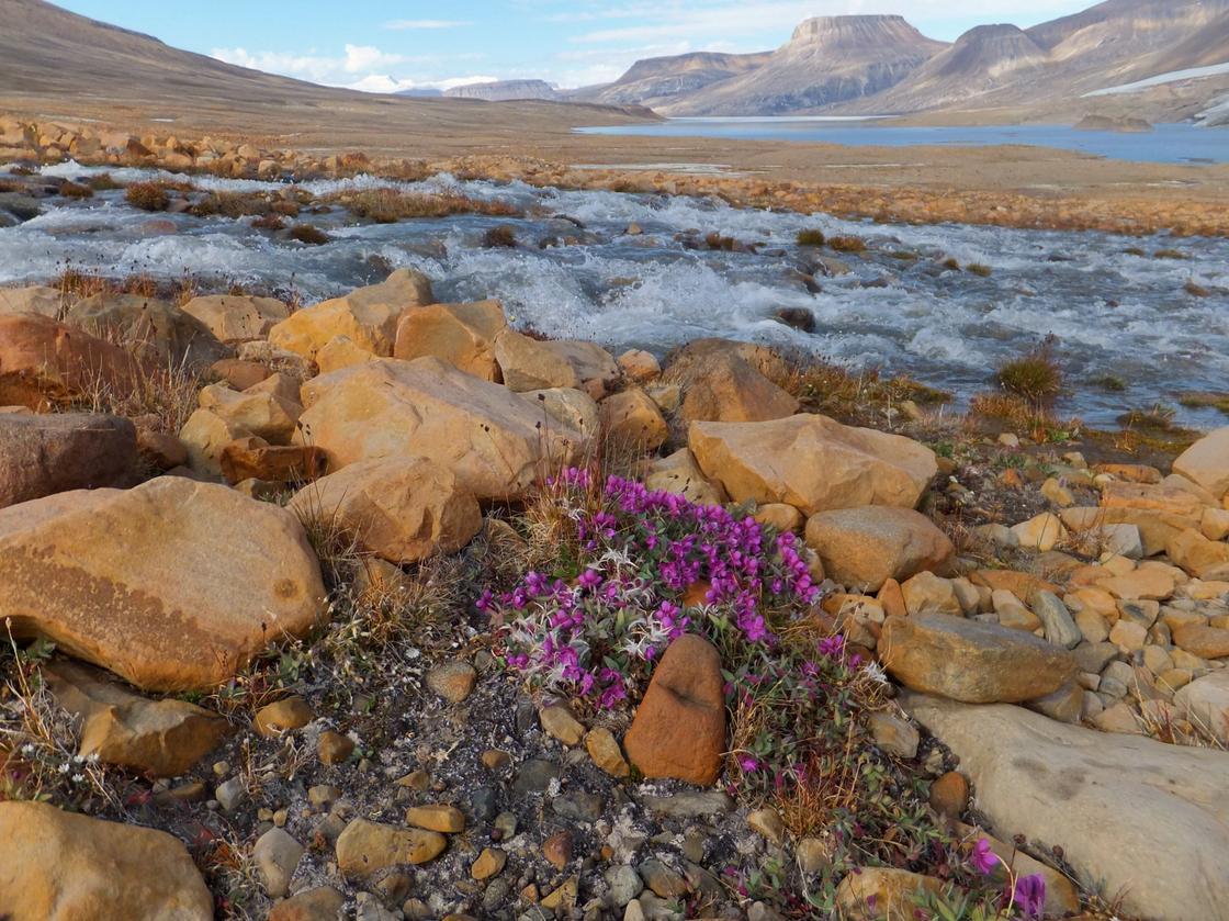 Горная река и цветы