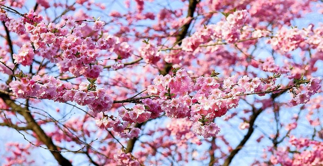 Какой сегодня праздник в Казахстане и мире 20 марта