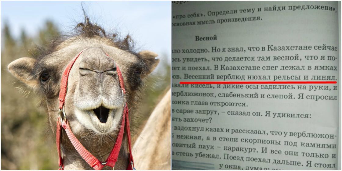 """""""Весенний верблюд нюхал рельсы и линял"""": родителей возмутили тексты в школьных учебниках"""
