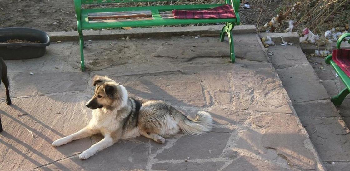 Трехлапый щенок помог спасти более 100 собак и 300 кошек