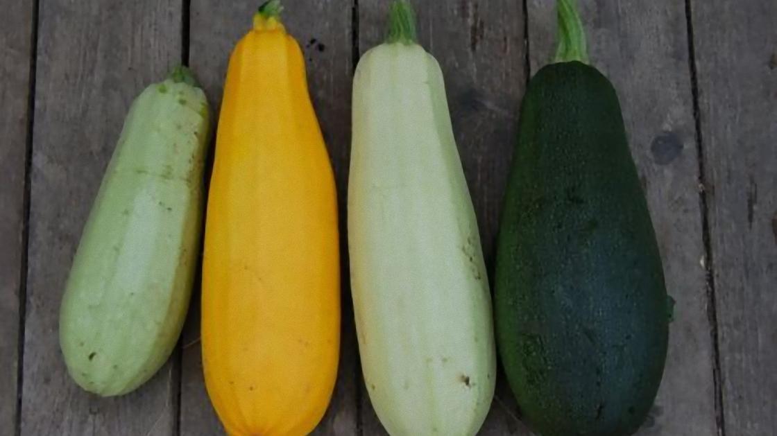 Четыре разноцветных кабачка