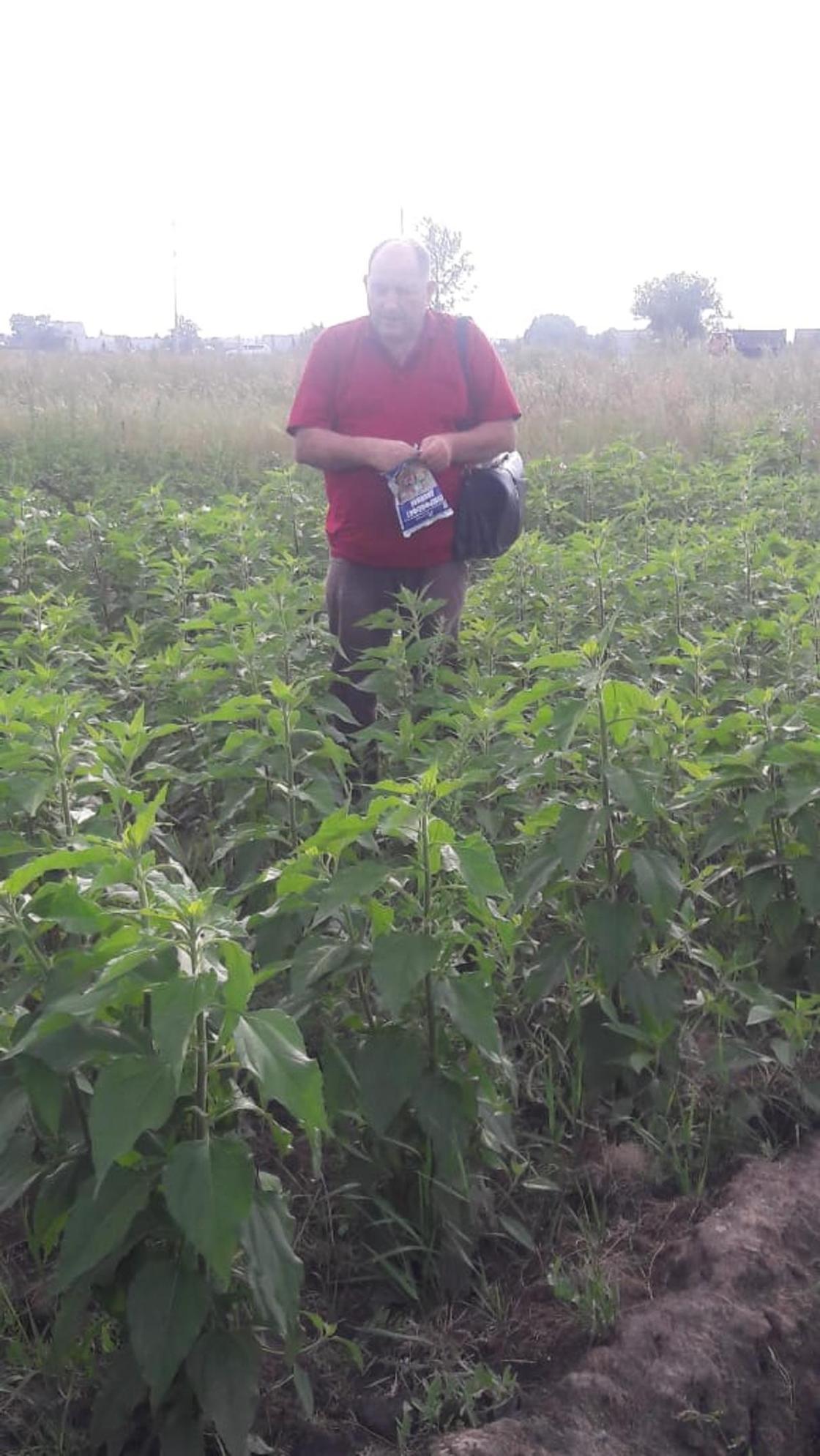 Растение-эколога выращивает биолог из Усть-Каменогорска