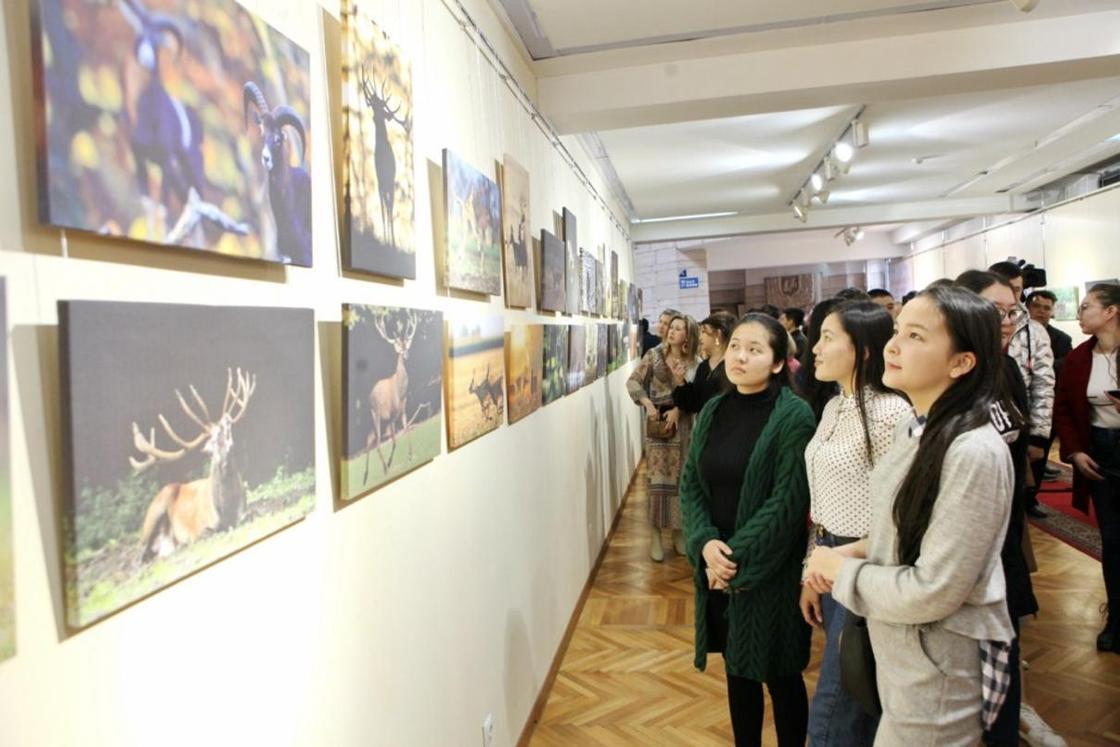 В Алматы открылась выставка венгерского фотохудожника «Путь оленей»