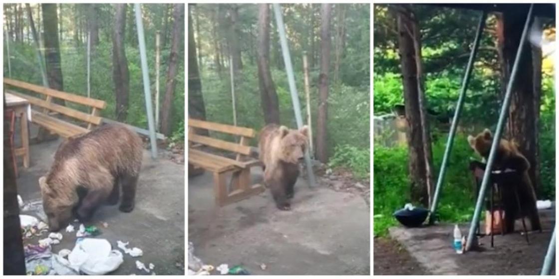 Медведь напугал отдыхающих и съел их шашлык в Риддере